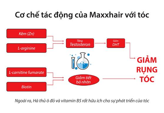 cơ chế chữa trị rụng tóc của maxxhair