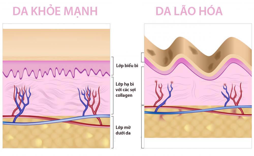 cấu trúc lớp da
